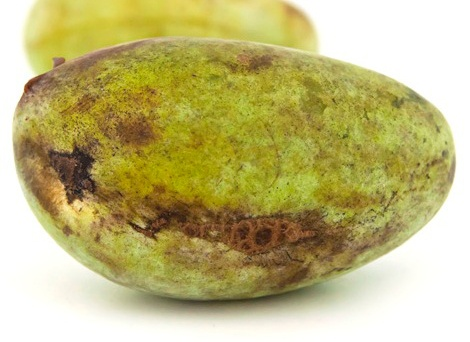 Paw Paw Cell Reg